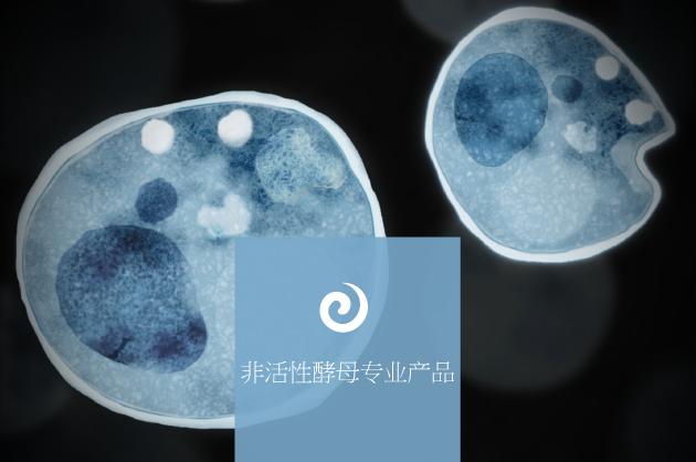 非活性酵母专业产品