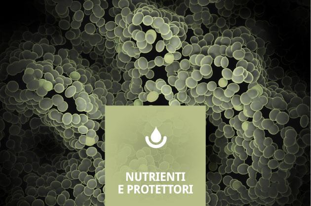 Nutrients & Protectors