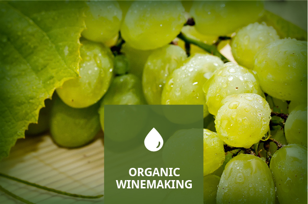 Organic Winemaking