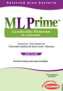 ML Prime