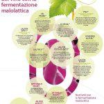 Perfezionare il profilo sensoriale del vino con la fermentazione malolattica
