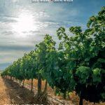 Lallemand SA's new Product Catologue 2021/2022