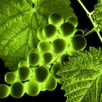 """«Soluciones para combatir los efectos del cambio climático en los viñedos"""" – Grabación en diferido"""